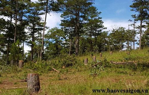 Khởi tố 5 đối tượng đánh bảo vệ rừng để cướp đoạt tài sản